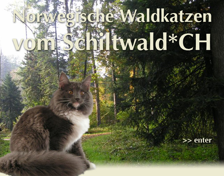Banner vom-Schiltwald