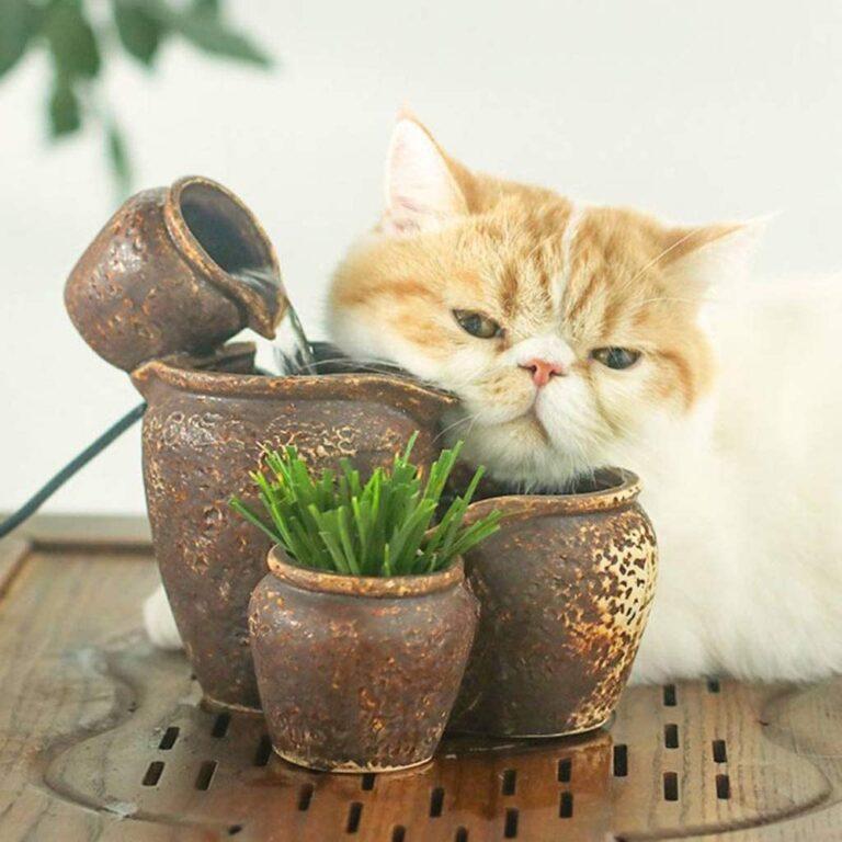 WYJW Katzenwasserschale