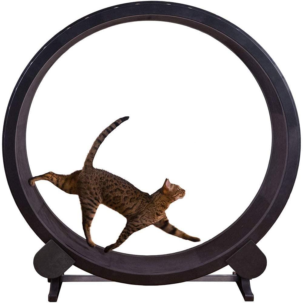 Katzenrad